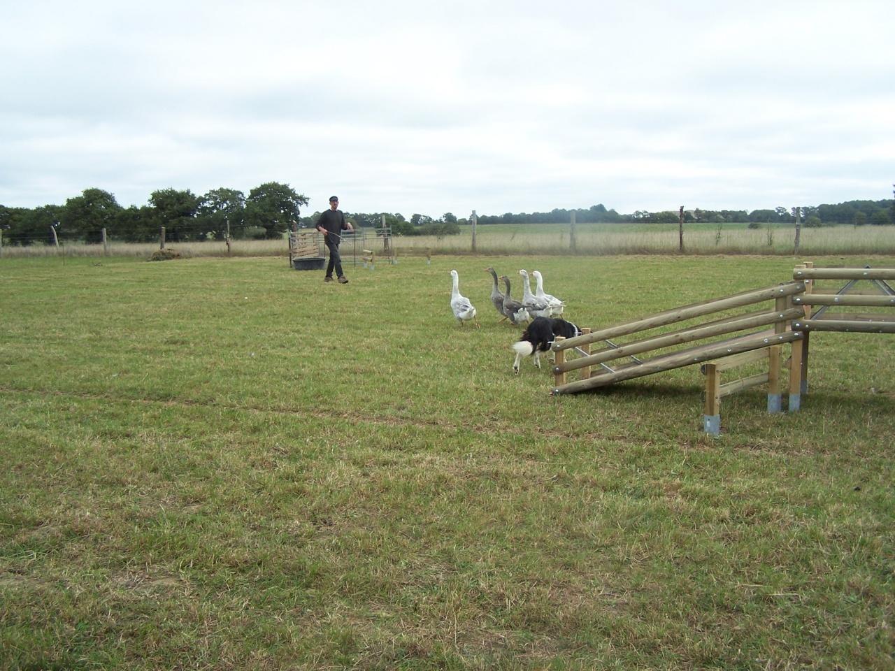 concours oies 9 octobre 2011 001